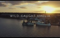 #LOVEAMELIA presents Wild-Caught Amelia
