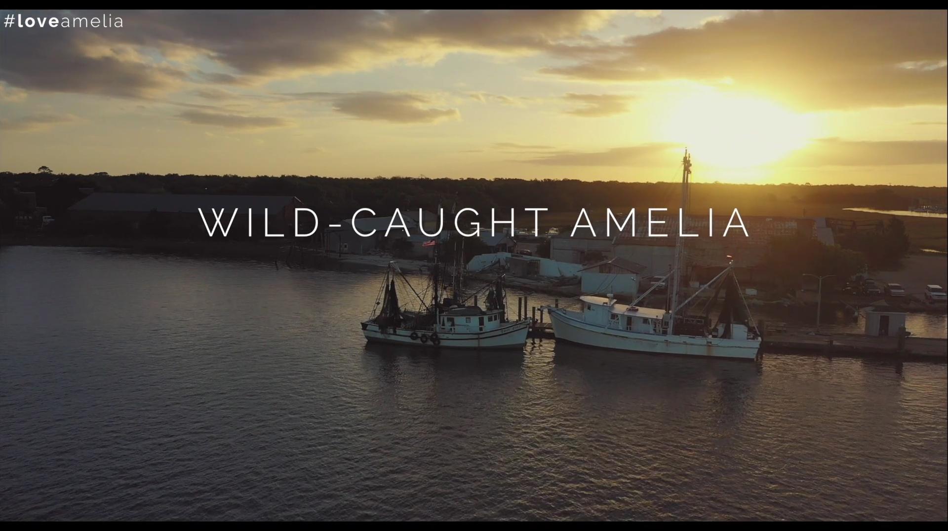 wild caught amelia thumbnail